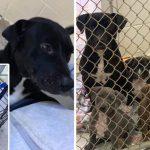 สุดสะเทือนใจเมื่อพลเมืองดีพบแม่หมาถูกทิ้งในกรงข้างถนน พร้อมลูกน้อยแรกเกิดอีก 4 ตัว