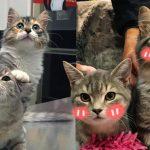 คู่หูลูกแมวจรจัด ถูกรับเลี้ยงไปอยู่บ้านใหม่ด้วยกัน ได้มีทาสรับช่วงปีใหม่