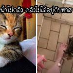 ลูกแมวรักครอบครัวใหม่มากๆ จึงตามไปอยู่ใกล้ๆ พวกเขาทุกที่ ไม่เว้นแม้แต่ตอนอาบน้ำ