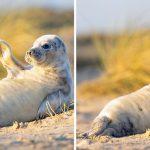 'นุ้งลูกแมวน้ำ' ขึ้นมานอนอาบแดดบนชายหาด ทำเอาคนที่พบเห็นใจละลายไปตามๆ กัน