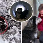 แม่หมาจรจัดเดินออกมาจากท่อที่ปกคลุมด้วยหิมะ เพื่อหาใครสักคนไปช่วยลูกๆ ของมัน