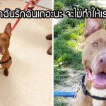 สุนัขผู้น่ารักรอบ้านนานถึง 3 ปี และถูกส่งกลับซ้ำแล้วซ้ำอีก แต่มันก็ยินดีรอต่อไปอย่างมีหวัง