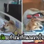 สุนัขบำบัดวัย 19 ปี ทำหน้าที่ให้กำลังใจผู้ป่วยในบ้านพักคนชรา จนลมหายใจสุดท้ายของมัน