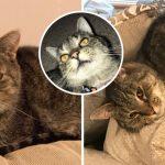 """นักศึกษาสาวที่เครียดกับการเรียน ชีวิตเปลี่ยนหลังรับ """"แมวขี้อ้อน"""" มาอยู่เป็นเพื่อน"""