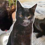 หญิงกังวลแมวอดข้าวอดน้ำ นึกว่ามันจะตาย แต่พอรู้ผลตรวจจากหมอแล้วเหนื่อยใจแทน