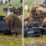 """""""ลูกเพนกวิน"""" พากันรุมล้อมช่างภาพ และสำรวจกล้องพวกเขาด้วยความอยากรู้อยากเห็น"""