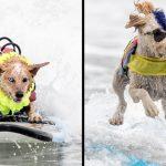 พาไปดู 'สุนัขโคตรคูล' งัดลีลาเด็ดพร้อมโชว์ความสามารถในการแข่งขันโต้คลื่นสุนัขประจำปี