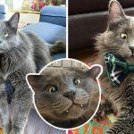 แมวตาเขได้รับชีวิตใหม่อันแสนสุข มันจึงส่งต่อความสุขโดยระดมเงินเพื่อสัตว์ในศูนย์พักพิง