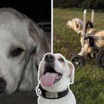 คนใจดีช่วย 'สุนัขอัมพาต' ที่ถูกครอบครัวทิ้ง และทำให้เห็นว่ามันก็เป็นสัตว์เลี้ยงที่ยอดเยี่ยมได้
