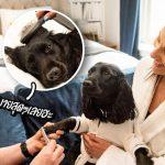 โรงแรม 5 ดาวทำสปาเอาใจคนรักหมา ด้วยคอร์สนวดผ่อนคลายหมาไปพร้อมเจ้าของ