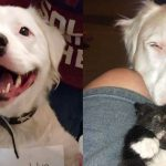 หมาจากศูนย์ที่ถูกรับเลี้ยง พยายามส่งต่อความรักให้แมวน้อย แม้ไม่รู้มันจะชอบไหม
