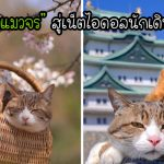 """คู่รักชุบเลี้ยง """"อดีตแมวจร"""" พาพวกมันไปท่องเที่ยวทั่วประเทศ จนกลายเป็นคู่หูนักเดินทาง"""