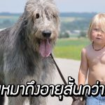 ทำไมสุนัขถึงอายุสั้นกว่าคน? ลองฟังคำตอบจากเด็กชายวัย 6 ขวบ รับรองคุณต้องยิ้ม