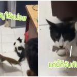 แก๊งหนุ่มหอเจอหนูเข้าห้อง แตกกระเจิงกันไปคนละทาง ดีใจเฮลั่นเมื่อเจ้าแมวมาช่วย