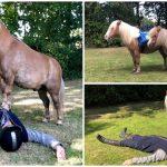 ครูฝึกม้าโชว์ความแสนรู้ของพวกมัน ผ่านวิดีโอการทำ CPR โดยม้าแสนน่ารัก