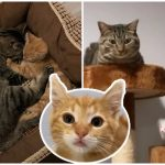 พี่แมวเข้ามาเป็นเพื่อนให้กับลูกแมวขี้อาย ช่วยให้มันกล้าเข้าหาคนมากขึ้น