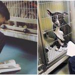 เด็กชายวัย 10 ขวบ อ่านหนังสือให้หมาในศูนย์ฟังทุกวันหยุด ช่วยพวกมันคลายเครียด