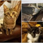 ลูกแมวขี้อายซ่อนตัวในกองไม้ กล้าหาญมากขึ้นเมื่อได้เป็นเพื่อนกับแมวตาเดียว