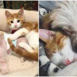 ลูกแมวจรจัด พุ่งเข้าไปกอดพี่หมาทันทีที่เข้าบ้าน แล้วแบบนี้ใครจะกล้าแยกพวกมัน!?