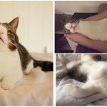 หน้าของแมวดูแปลก เพราะป่วยเป็นดาวน์ซินโดรม แต่คนก็ยังหลงในความน่ารักของมัน