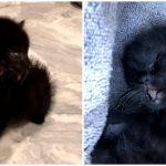ลูกแมวแปลกเกิดมามี 2 หน้า ถูกแม่แมวทอดทิ้ง ได้คุณหมอใจดีช่วยรับเลี้ยงเอาไว้