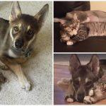 หมาเลือกแมวจากศูนย์เอง แล้วพามันกลับอยู่บ้าน จากนั้นพวกมันก็กลายเป็นเพื่อนรัก