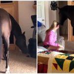 หญิงสาวรักเจ้าม้ามาก เลยชวนมันเข้ามานั่งชิลในบ้าน เพื่อใช้เวลายามว่างด้วยกัน