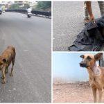 หมาอ่อนแอยืนแทบไม่ไหว เจอคนใจดีเข้ามาช่วยมัน ก่อนที่มันจะล้มเพราะหมดแรง