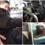 หมานั่งรถบัสไป-กลับสวนเองทุกวัน กลายเป็นผู้โดยสารขาประจำที่ทุกคนรัก