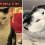 """แมวตัวร้ายทำแต่เรื่องแสบ ศูนย์ฯ เลยเปิดตัวมันตรงๆ ในฐานะ """"แมวที่แย่ที่สุดในโลก"""""""