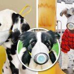 เจ้าของหมาซื้อหน้ากากให้เจ้าตูบสุดรักใส่ ทันกระแสป้องกันไวรัสโคโรนา