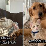 20 สัตว์แสนดีผู้มีจิตใจเต็มเปี่ยมไปด้วยความรัก และความรักนั้นเพียงพอสำหรับโลกทั้งใบ