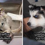 17 สัตว์เลี้ยงเปลี๊ยนไป๋ เมื่อถูกจับอาบน้ำจนหมดสภาพ สงสารนะ แต่อดขำไม่ได้จริงๆ