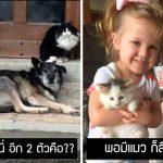 21 สแนปแชทฮาๆ ของมะหมา ที่พิสูจน์ว่าการมีสุนัขในชีวิต มันดีและคุ้มค่าอย่างแน่นอน