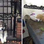 15 มะหมาจอมกวนที่พยายามจะเป็นเด็กดี แต่สิ่งที่เห็น ดูเหมือนจะตรงกันข้ามนะ…