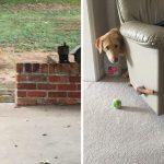 """26 ภาพศึกเดือดระหว่าง """"หมา vs แมว"""" ที่จะทำให้บ้านของคุณเต็มไปด้วยความบันเทิงคูณ 2"""