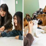 """คาเฟ่สัตว์สุดชิคในประเทศญี่ปุ่น เปิดให้คุณใช้เวลาร่วมกับ """"คาปิบารา"""" อย่างใกล้ชิด!!"""