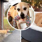 หมาน่าสงสาร รอคนมารับเลี้ยงในศูนย์นาน 6 ปี ในที่สุดก็มีคนมาพามันไปอยู่บ้าน