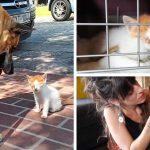 พี่หมาเจอลูกแมวจรจัด เลยอยู่เป็นเพื่อนมัน ไม่ยอมห่างจนกว่าเจ้าของจะช่วยน้อง