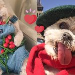 พบเจ้า Marnie หมาแก่หน้าเด็กแสนน่ารัก เซเลบอินสตาแกรมยอดฟอล 2 ล้าน!!
