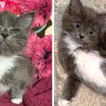 ลูกแมวพิการขาหลังงอแฮปปี้สุดๆ  เพราะทุกคนในบ้านใหม่ มอบความสุขให้มันตลอด