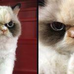 หญิงสาวมอบบ้านให้กับแมวหน้าโกรธ มันเลยมอบความรักให้เธออย่างไม่สิ้นสุด