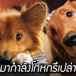 ผลวิจัยพบ เจ้าหมาผู้แสนซื่อสัตย์ สามารถโกหกเราเพื่อให้ได้สิ่งที่มันต้องการ