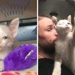 """มนุษย์ช่วย """"ลูกแมวตาเดียว"""" จากข้างถนน และทำให้มันเติบโตท่ามกลางความรัก ความอบอุ่น"""