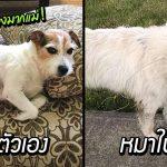 แม่จำหมาไม่ได้เบอร์แรง เห็นโพสต์หมาหายนึกว่าหมาตัวเอง แต่มันไม่คล้ายเลย!!