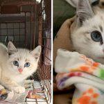'ลูกแมวขี้อาย' ถูกช่วยจากข้างถนน เรียนรู้ที่จะเชื่อใจมนุษย์เมื่อมันถูกห่อเป็นเบอร์ริโต้