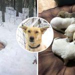 แม่หมาจรจัดพยายามปกป้องลูกๆ โดยการสร้างที่พักพิงกลางหิมะ และโอบกอดพวกมันไว้