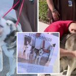 หนุ่มเจอ 'สุนัขที่หายไป' ในศูนย์ฯ ขณะที่เจ้าหน้าที่กำลังถ่ายรูปพวกมัน เพื่อหาบ้านให้