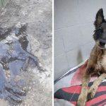 สุนัขถูกปกคลุมด้วยน้ำมันดินจนเกือบตาย แต่รอดมาได้เพราะอาสาสมัครช่วยไว้ทันเวลา