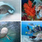 """30 ภาพถ่ายอันงดงามของ """"สัตว์โลกใต้ท้องทะเล"""" ที่ได้รับรางวัลจากการประกวดปี 2020"""